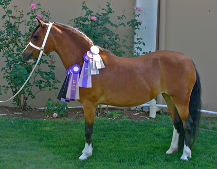 Jazzy was Suprme Champion and Reserve Supreme at the 2009 OWPS Fall Show.